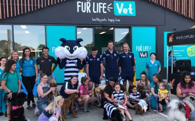 Fur Life Vet Torquay North – Open Day